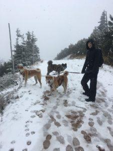 góry z psem