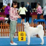 wystawa psów